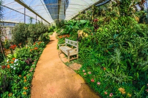 Essential Gardening Tips in Winter to Grow More
