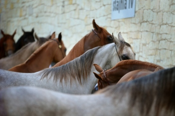 Famous Horse Breeds and How You Can Care Your Horse